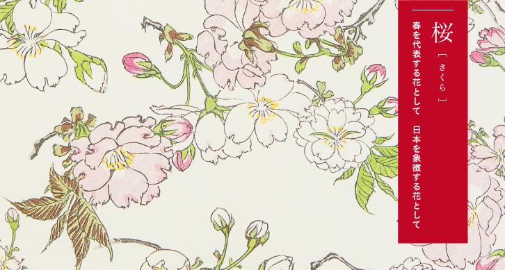 桜 -春を代表とする花として 日本を象徴する花として-