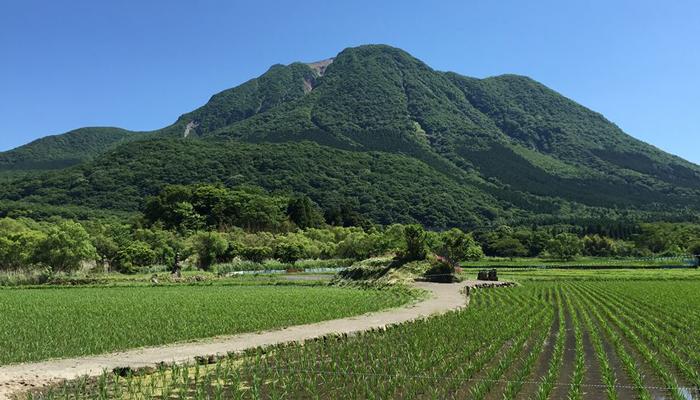 塚原高原からの由布岳