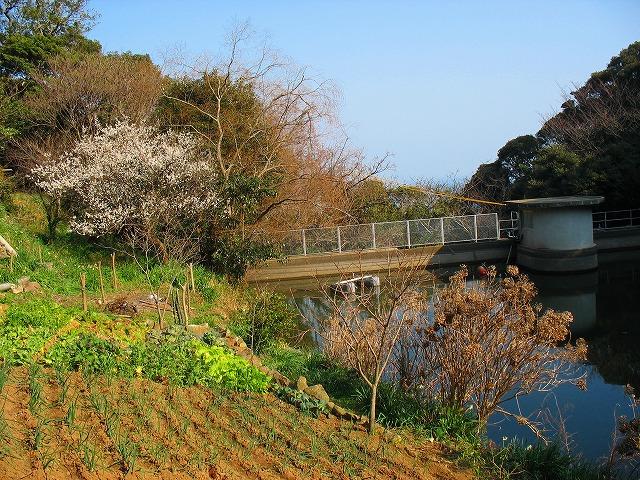 水源池と花畑のロケーション