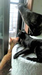 猫の脱走防止柵 お客様の声