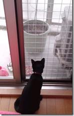 猫の脱走防止柵