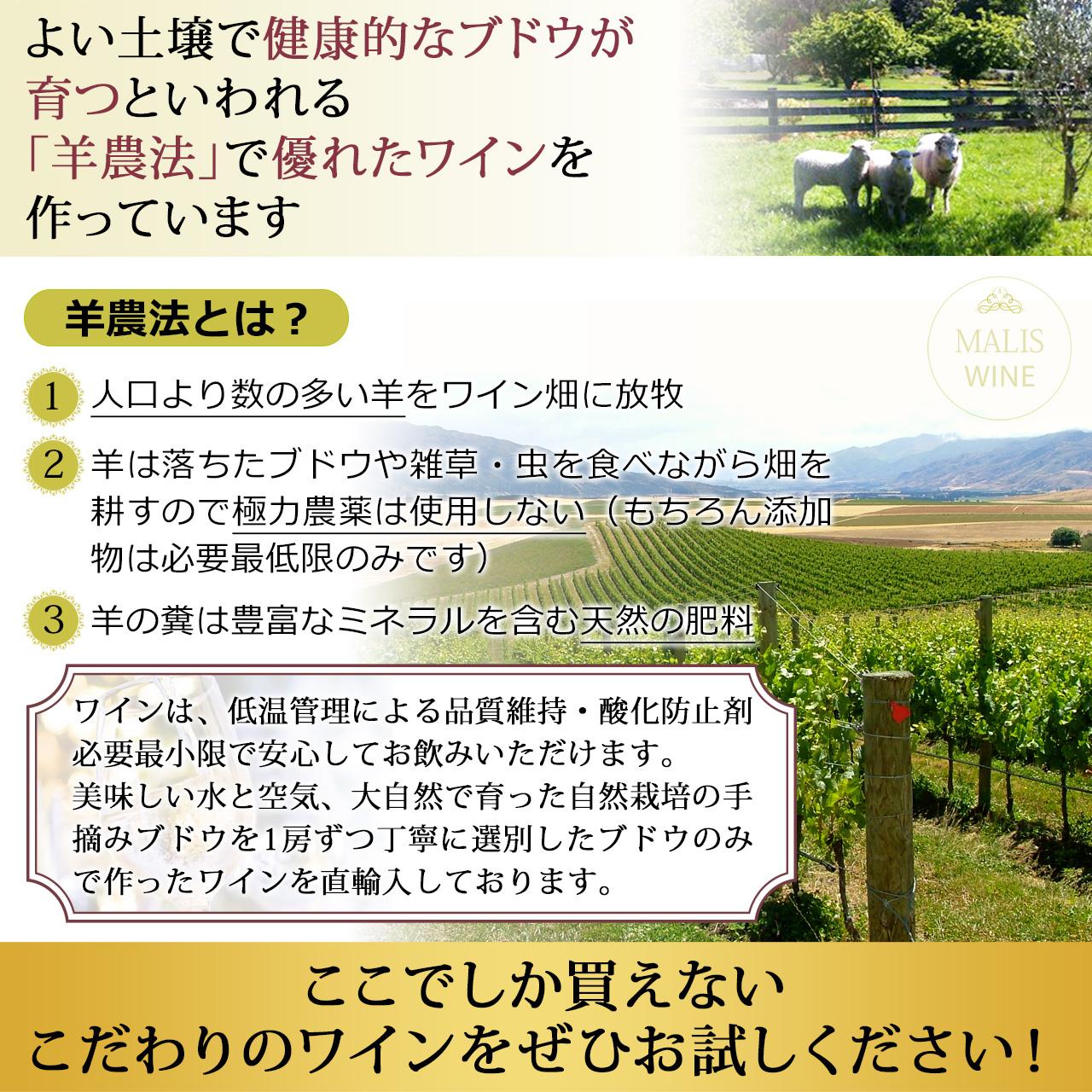 よい土壌で健康的なブドウが育つといわれる「羊農法」で優れたワインを作っています