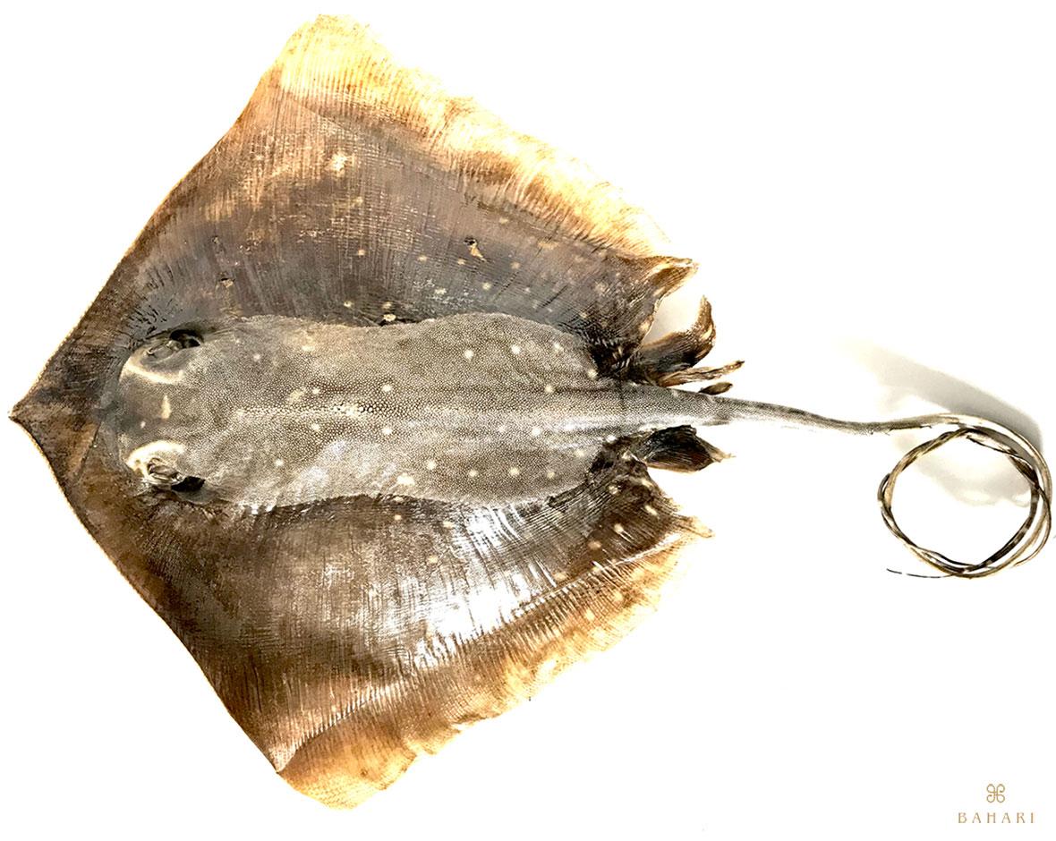 ガルーシャ剥製