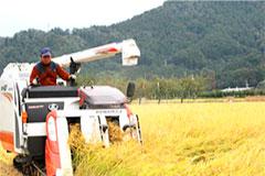 北信州中野市 小柳農園 皇室献上農家 おとりもち