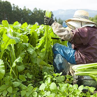 東信州長和町 竹内農産 信州の郷土食 野沢菜6種(10個入り)セット