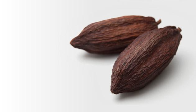 世界中から厳選した、オーガニックカカオ豆。