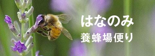 はなのみ養蜂場便り