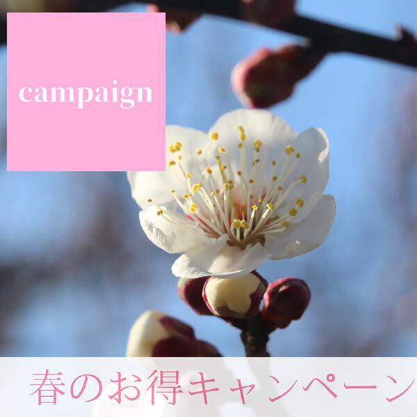 春のお得キャンペーン