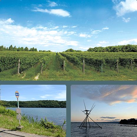 世界農業遺産の地に広がる、日本海側最大の2万本を超える葡萄畑。<