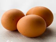 卵 イメージ画像