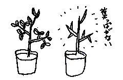 「季節によって葉っぱがないことも」