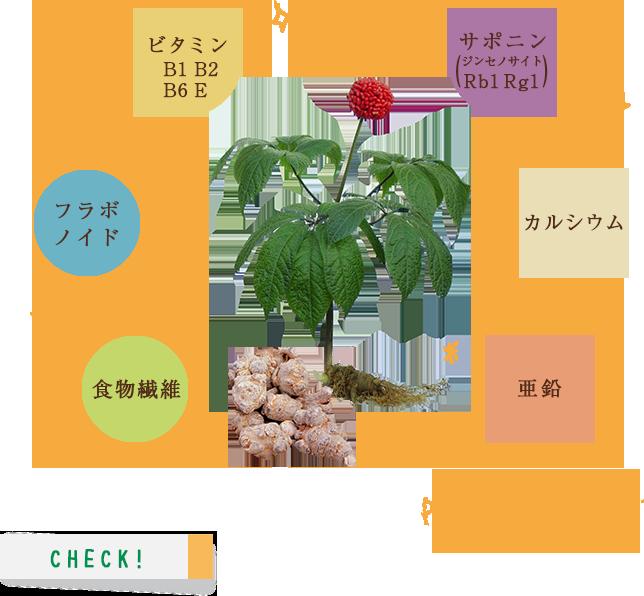 田七人参の栄養素