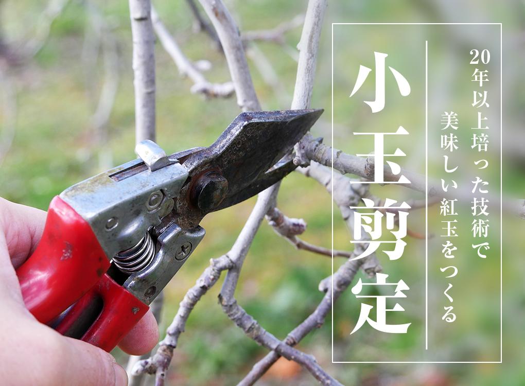 20年以上培った技術で美味しい紅玉をつくる 小玉剪定 りんご