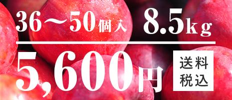 りんご 36~50個入 9kg
