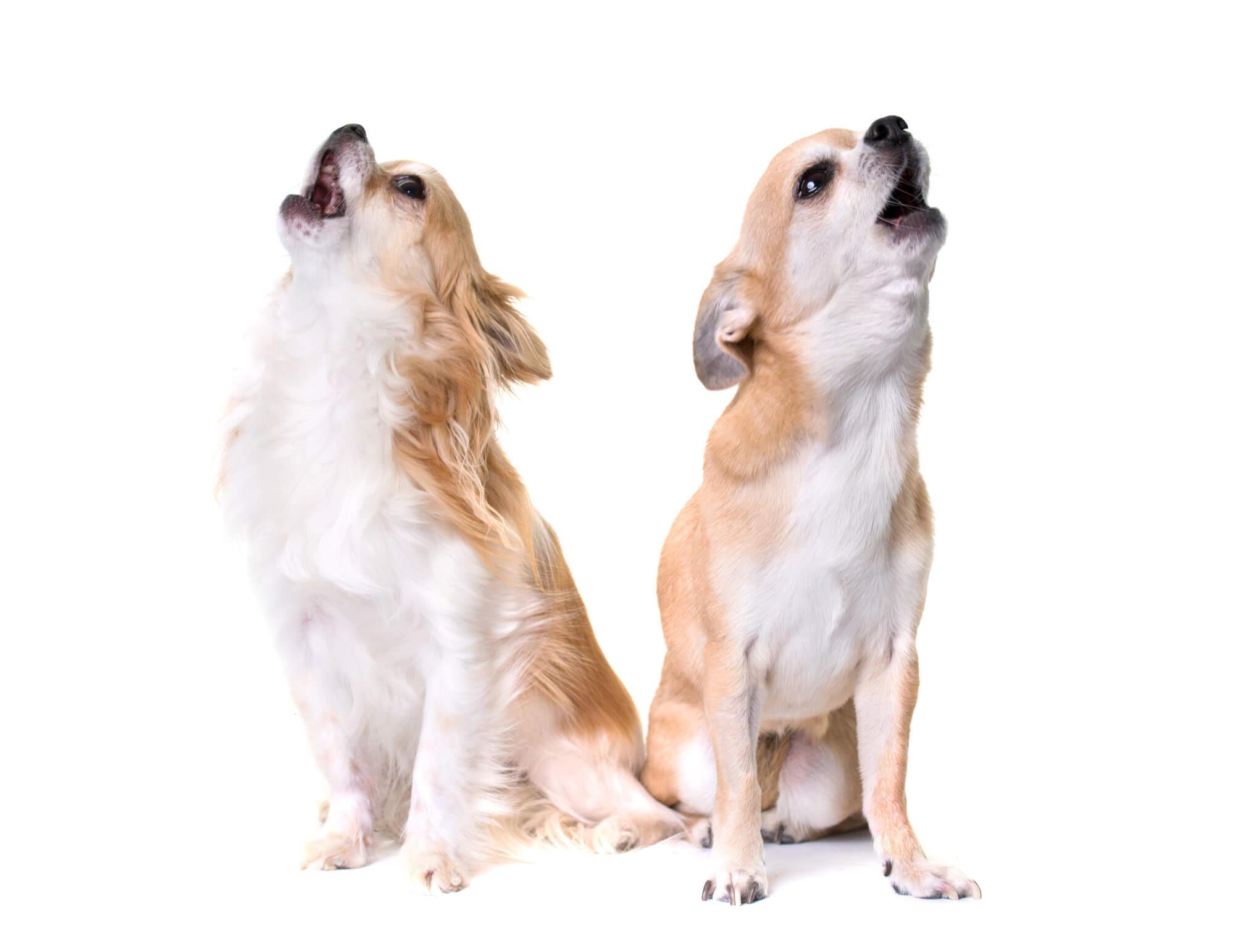 犬の無駄吠え - 画像1
