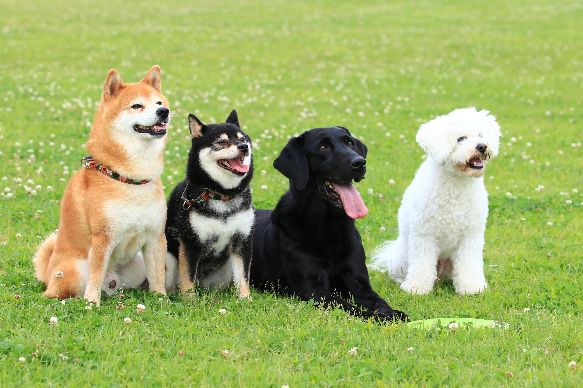 人気犬種の特徴 - メイン