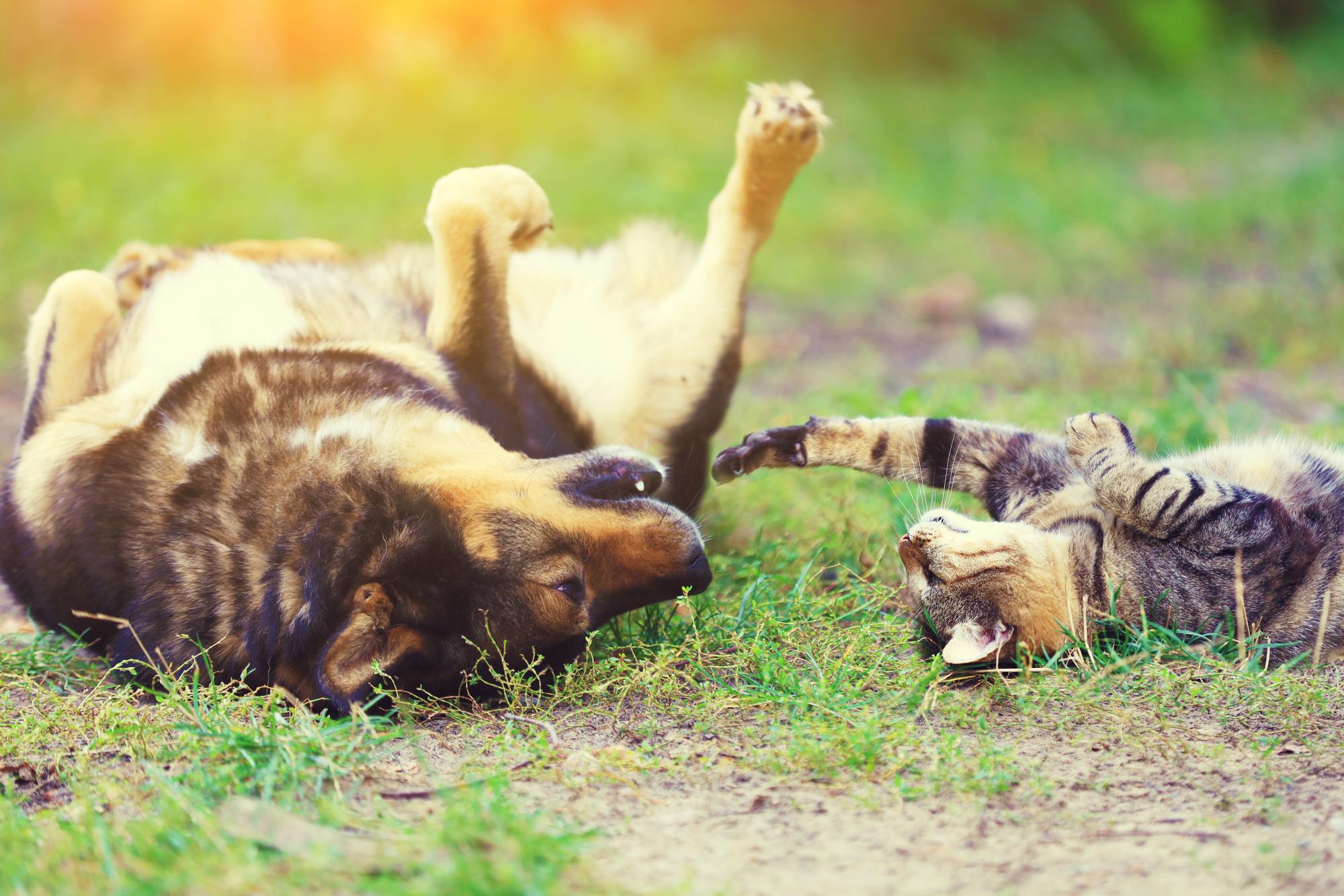 ペットの防虫の画像