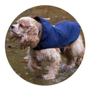犬用ウエア・レインコート