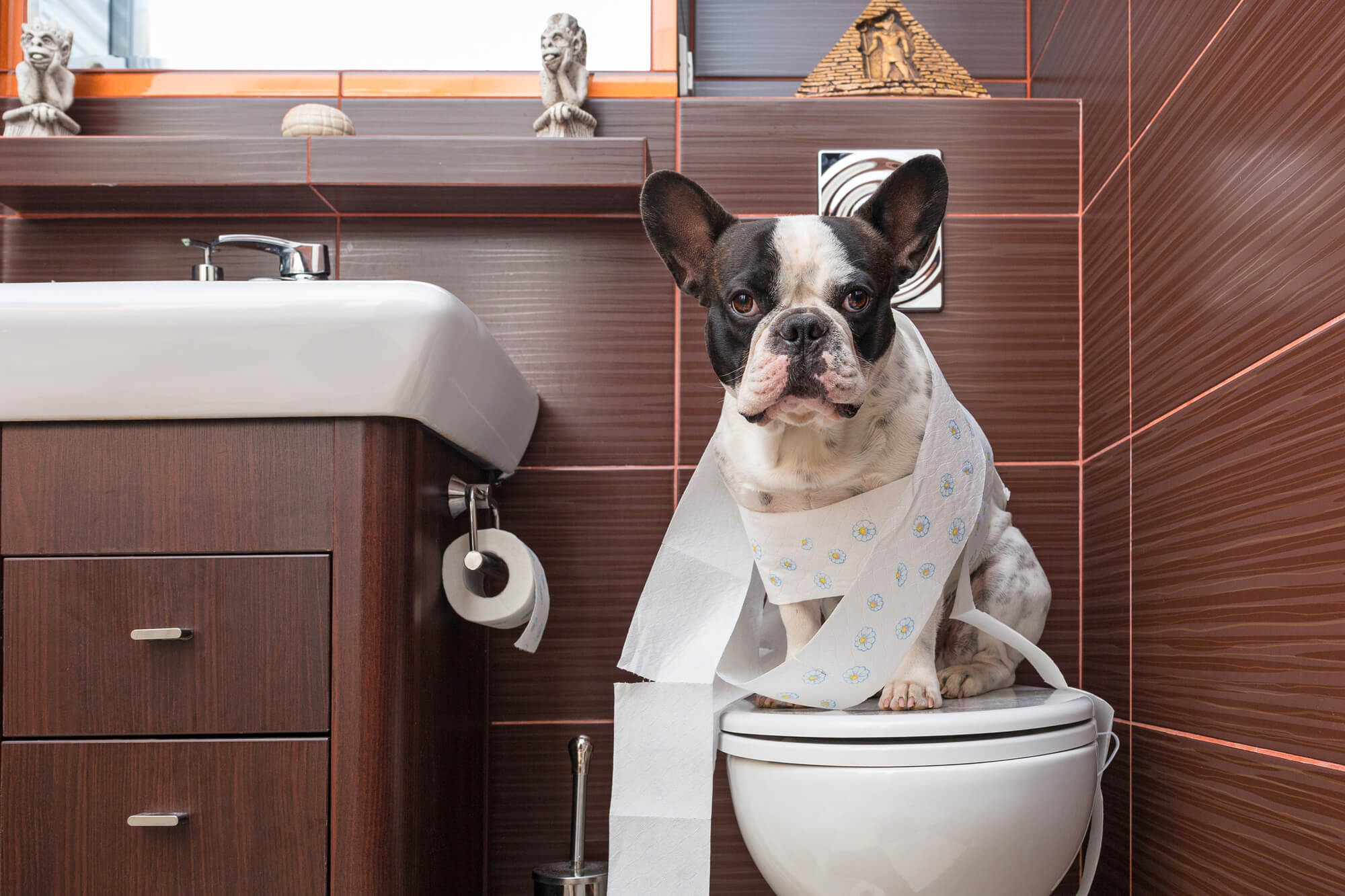 トイレのしつけの画像