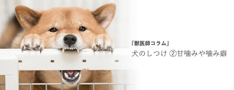 犬のしつけ - 甘噛みや噛み癖