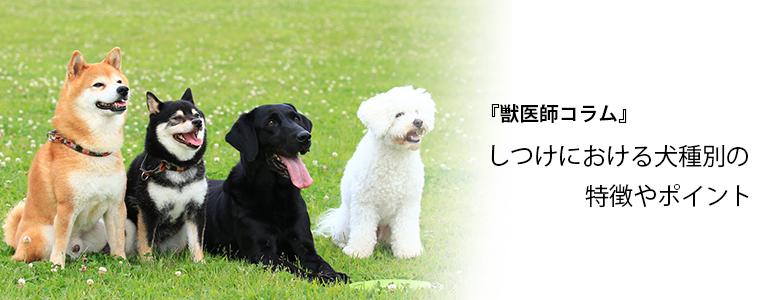 しつけにおける犬種別の特徴やポイント