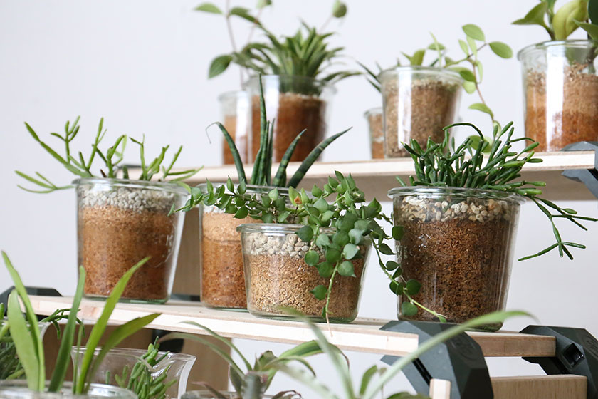 EASY CARE PLANTS