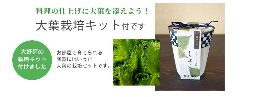 大葉栽培キット