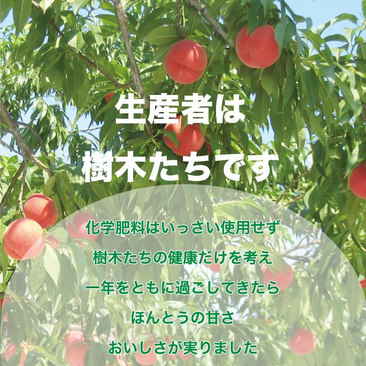 「フルーツ童夢」では、もも、なし、ぶどう、洋なしなどがあり、生産者はその樹木たちです。