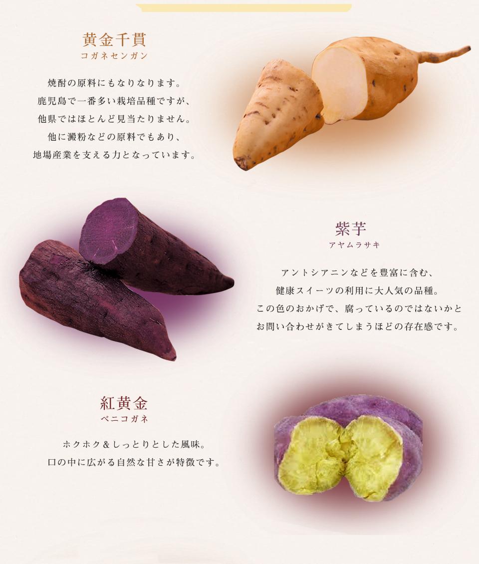 黄金千貫、紫芋、紅黄金、安納芋