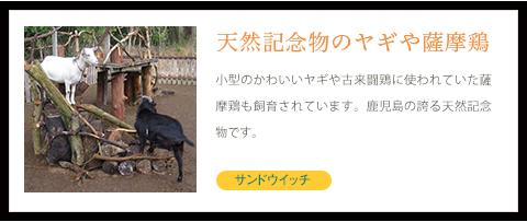 天然記念物のヤギや薩摩鶏