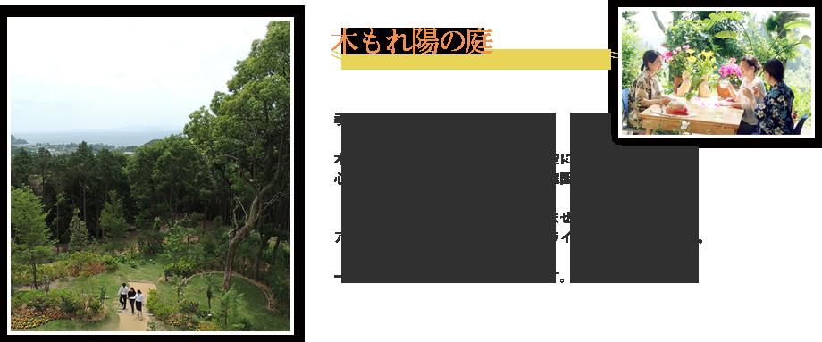 木もれ陽の庭
